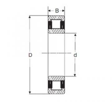 70 mm x 125 mm x 31 mm  SIGMA NU 2214 cylindrical roller bearings